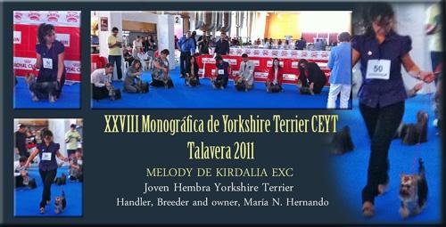 XXVIII Monográfica de Yorkshire Terrier CEYT Talavera 2011  Clase Joven Hembra Yorkshire Terrier MELODY DE KIRDALIA EXC Handler, breeder and owner, María N. Hernando