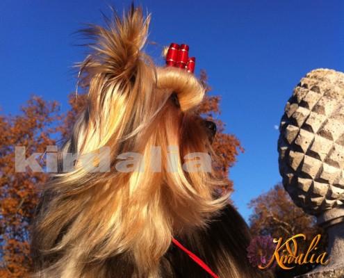 Etología, Adiestramiento canino, Signos de estrés