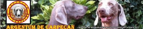 Argentum de Carpecan