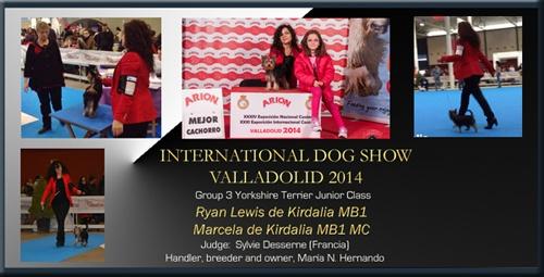 Exposición Internacional Canina Valladolid 2014 Ryan Lewis de Kirdalia MB1 Marcela de Kirdalia MB1 MC