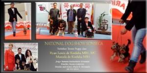 National Dog Show Sonseca 06/04/14 Puppy class Yorkshire Terrier Ryan Lewis de Kirdalia MB1, MC Marcela de Kirdalia MB1 Juzge: Ramune kazlauskaite (Lituania)