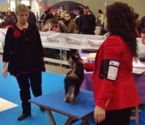 Exposición Internacional Canina  Valladolid CACIB 2014