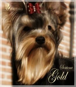 Soriena Gold
