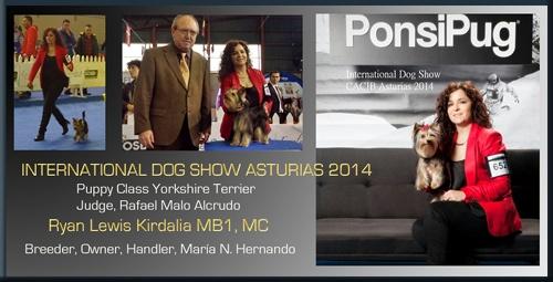 International Dog Show CACIB Asturias