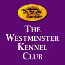 El Westminster Kennel Club