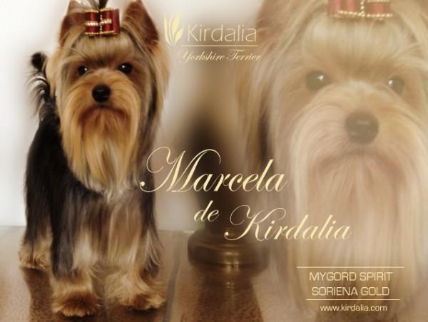 Marcela de Kirdalia