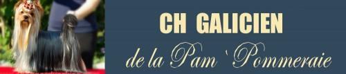 CH Galicien de la Pam`Pommeraie
