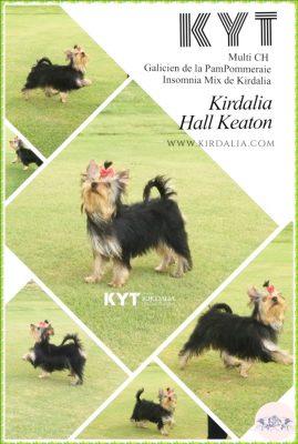 Loa mejores Yorkshire Terrier del mundo