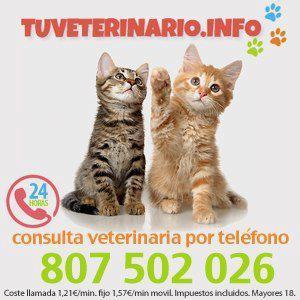 Tu veterinario info