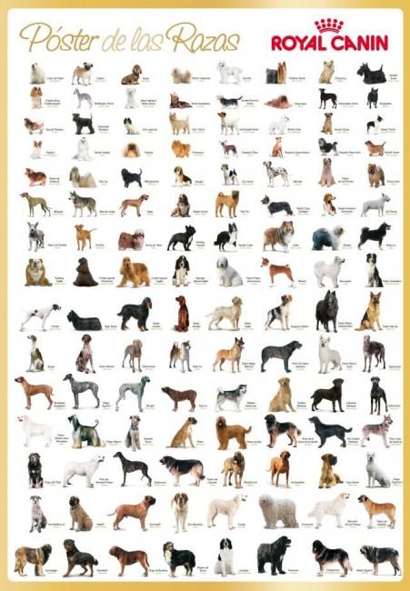 El Poster de las razas de Royal Canin