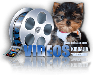 Videos Cachorros Kirdalia Yorkshire