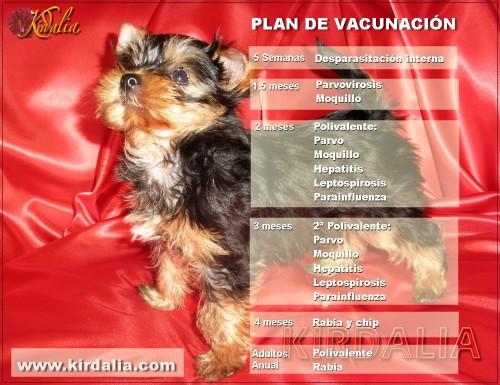 Plan de vacunación canina
