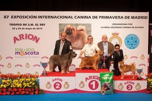 RESULTADOS, EXPOSICIÓN INTER CANINA MADRID 2015