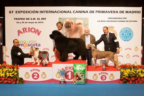 BIS VETERANOS EXPOSICION INTERNACIONAL PRIMAVERA DE MADRID 2015