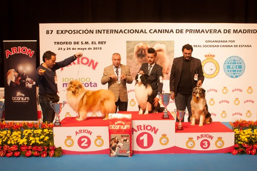 FINALES GRUPO 1 EXPOSICION INTERNACIONAL PRIMAVERA DE MADRID 2015