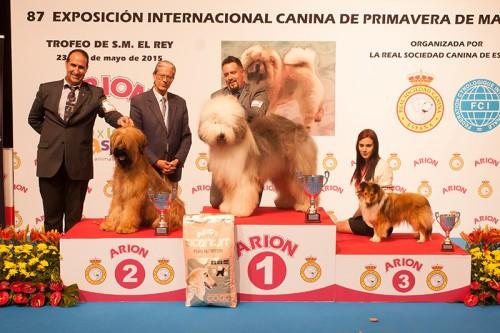 FINALES GRUPO 1 (JOVENES) EXPOSICION INTERNACIONAL PRIMAVERA DE MADRID 2015