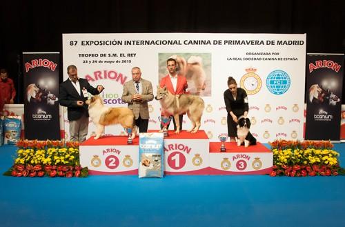 FINALES GRUPO I CACHORROS EXPOSICION INTERNACIONAL PRIMAVERA DE MADRID 2015