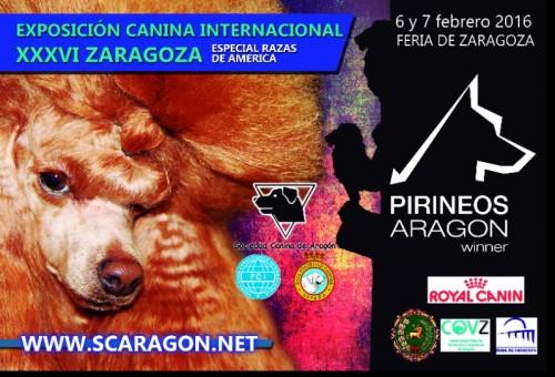 EXPOSICION CANINA INTERNACIONL ZARAGOZA 2016