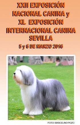 Exposición Nacional Internacional Canina Sevilla 2016