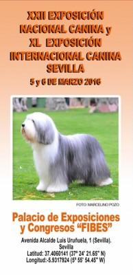 Exposición Nac Inter Canina Sevilla 2016