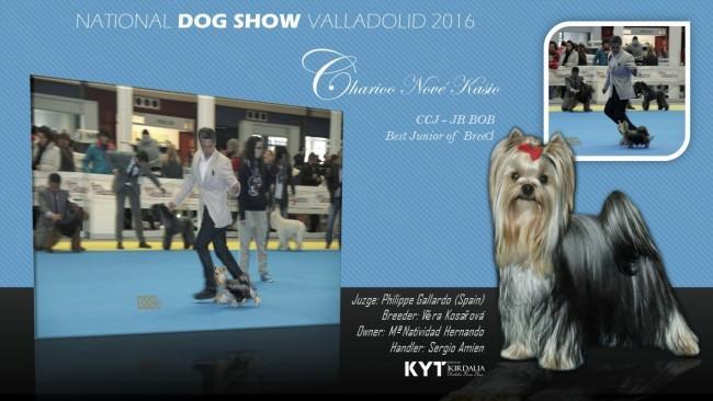 Los mejores Yorkahire Terrier del mundo