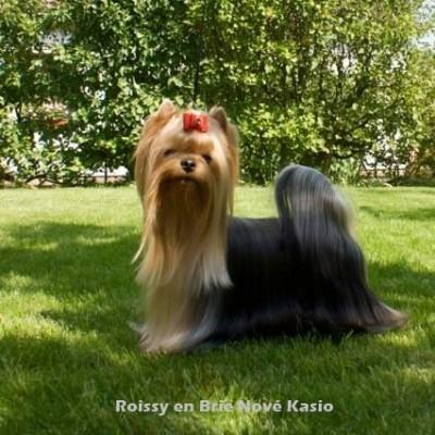 Roissy en Brie Nove Kasio