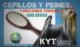 Cepillos y peines adecuados para Yorkshire Terrier