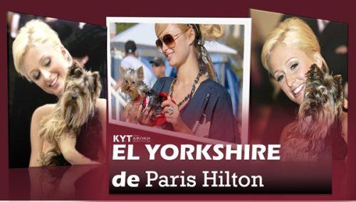 el-yorkshire-de-paris-hilton