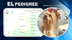 Cómo conseguir el pedigrí de un perro..?