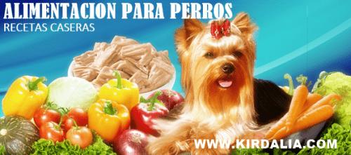 Arroz con verduras, recetas de comida casera para perros