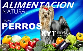 Alimentación adecuada para perros