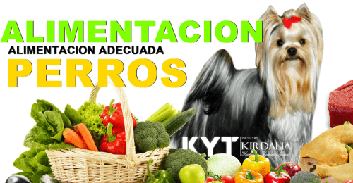 Alimentación natural para perros,