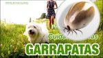 GARRAPATAS, como evitar que tu perro se infecte de estos parásitos