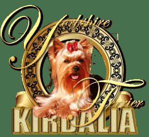 kirdalia Yorkshire Terrier